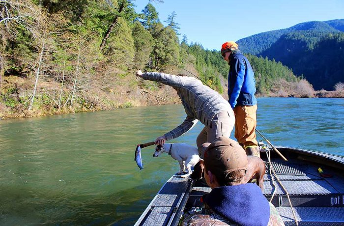 Catch and Release Winter Steelhead